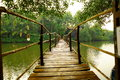 Wooden bridge across river in tropical forest. Royalty Free Stock Photo