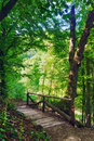 Wooden bridge in the forest old on a summer day Royalty Free Stock Image