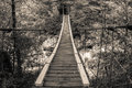 Wooden bridge in the forest without people Stock Photo