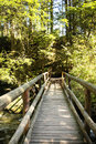 Wooden bridge in forest summer Stock Photo
