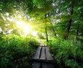 Wooden bridge in the forest sunrise over a Royalty Free Stock Image