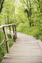 Wooden bridge in a forest. Wooden walkway in green forest near the Ropotamo river, Bulgaria Royalty Free Stock Photo