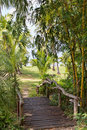 Wooden bridge in the jungle Royalty Free Stock Photos