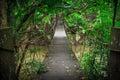 Wooden bridge in  jungle Royalty Free Stock Photo