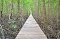 Wooden bridge and mangrove forest Royalty Free Stock Photo