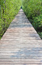 Wooden bridge mangrove reforestation Stock Photos