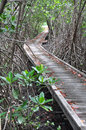 Wooden bridge through the mangrove reforestation in petchaburi thailand Stock Photo