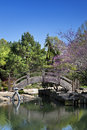 Wooden bridge over pond in a japanese garden two geese swim under at water park Royalty Free Stock Photo