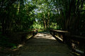 Wooden bridge in shady bamboo of sunny summer afternoon chengdu china Stock Image