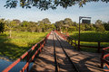 Wooden bridge to cross wet lands of Pantanal, Brazil Royalty Free Stock Photo