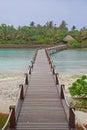 Wooden Bridge Walkway to a Greener World