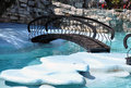 Wooden bridge in zoo small pool with seals Royalty Free Stock Images