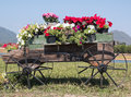 Wooden cart full of colorful flowers Royalty Free Stock Photo