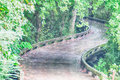 A wooden cart pathway bridge curves around trees Royalty Free Stock Photo