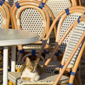 Wooden chairs in an outdoor restaurant Stock Photography