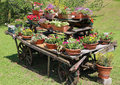 wooden chariot decorated with many pots of flowers in the meadow Royalty Free Stock Photo