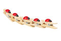 Wooden clothespins ladybirds rowed isolated over white background Royalty Free Stock Photography