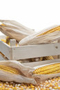 Wooden crate with corn ears Stock Photography