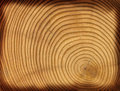Wooden cut texture Royalty Free Stock Photos