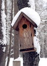 Wooden feeder for birds in winter forest Stock Image