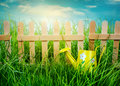 Wooden fence on blue sky background watering can garden grass and Stock Photos