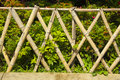 Wooden fence with green plants and some small flowers Stock Photography