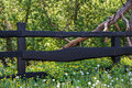 Wooden fence and nature. Royalty Free Stock Photo