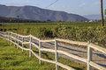 Wooden fence in paddock with the vineyards mountain the background winelands robertson Royalty Free Stock Photography