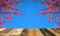 Wooden floor on sakura or flower queen tiger.