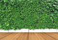 Wooden floor and vertical garden with tropical green leaf Royalty Free Stock Photo