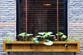 Wooden flower box in window Stock Photo