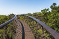 Wooden footbridge above trees in Kirstenbosch botanical garden, Cape Town