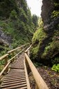 Wooden footbridge across stream