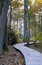 Wooden footpath at oak forest Royalty Free Stock Photo