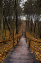 The staircase in the woods