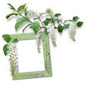 Wooden frame with spring flowers Stock Image