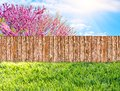 Wooden garden fence at backyard and blooming tree in spring Royalty Free Stock Photo
