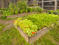 Wooden garden frames raised beds in community Royalty Free Stock Images