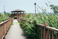 Wooden gazebo and windy wetland park in summer day Royalty Free Stock Photo