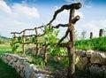 Wooden Grapevine Trellis Royalty Free Stock Photo
