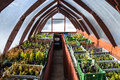 Wooden greenhouse interior of with small seedlings in plastic boxes Stock Images