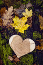 Wooden heart on a stump with fallen leaves in autumn forest. Royalty Free Stock Photo
