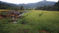 Wooden house on terrace rice field Stock Image
