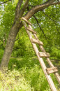 Wooden ladder erection of ladders in the trees Royalty Free Stock Image