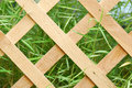 Wooden lattice background green grass Royalty Free Stock Photo