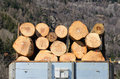 Wooden logs felled for timber production by heating Stock Image
