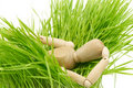 A wooden mannequin on green grass Stock Photos