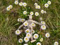 Wooden mannequin lying down on flowers on springtime Ecology and garden concept Royalty Free Stock Photo