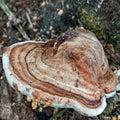 Wooden Mushroom. Royalty Free Stock Photo