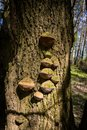 Wooden mushroom on tree Royalty Free Stock Photo
